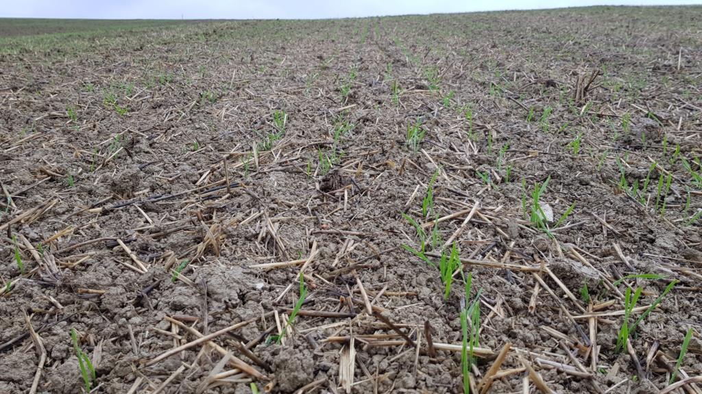 suivis blé 2020 20191042