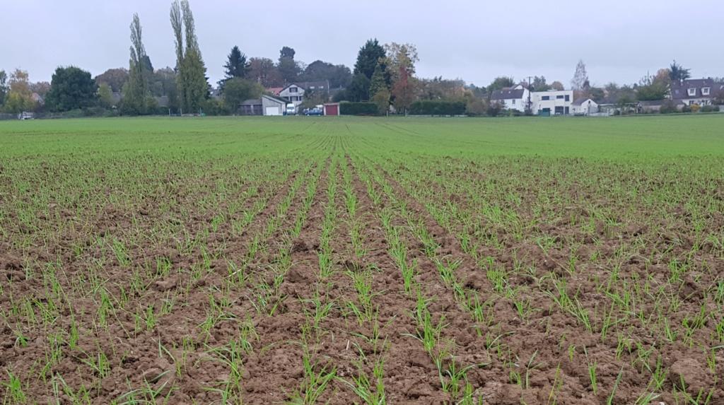 suivis blé 2020 20191043