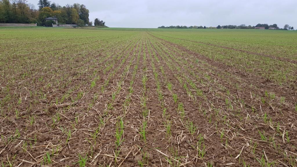 suivis blé 2020 20191044