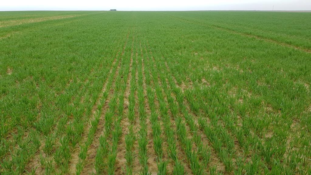 suivis blé 2020 - Page 4 20200335