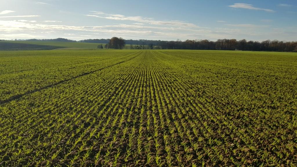 suivi blé 2021 20201216