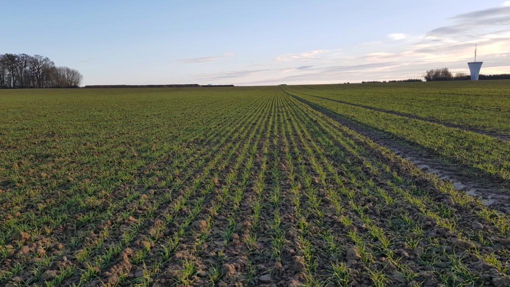 suivi blé 2021 20201219