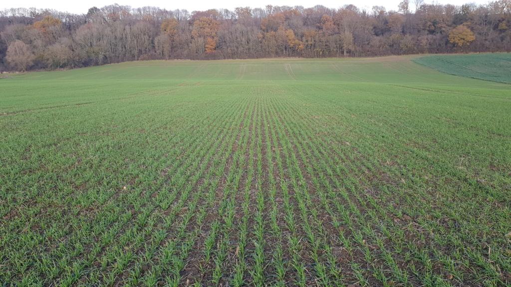 suivi blé 2021 20201221