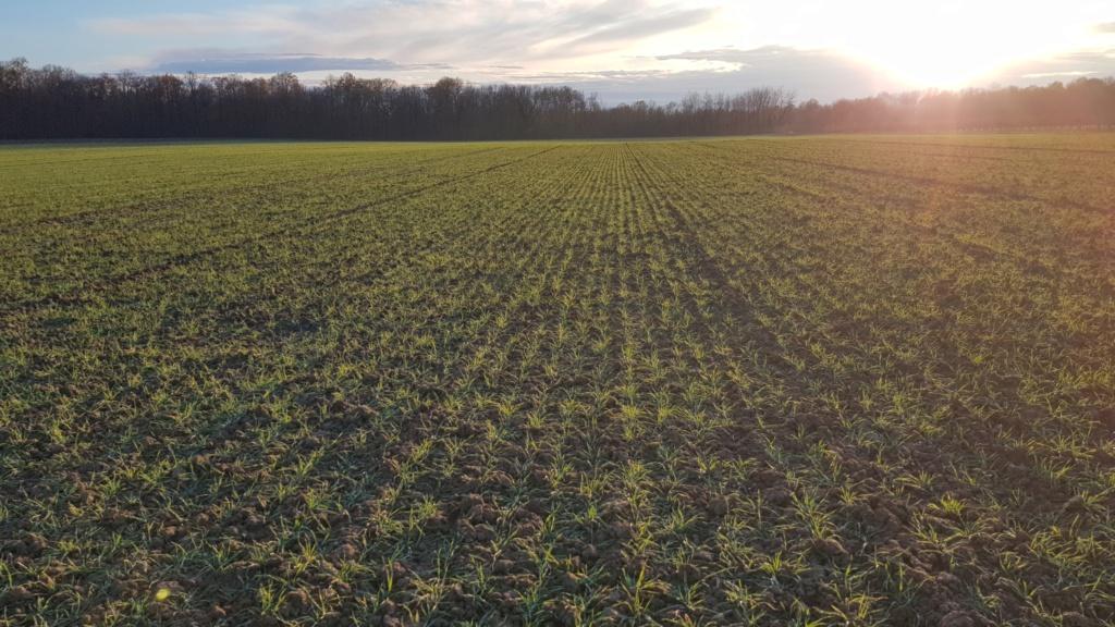 suivi blé 2021 20201223