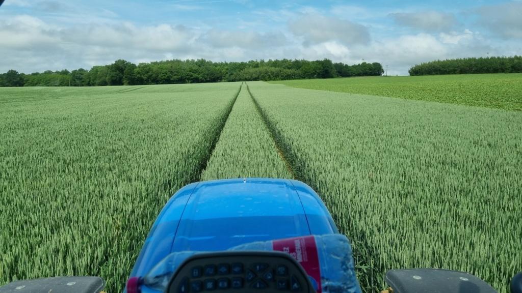 suivi blé 2021 - Page 19 20210611