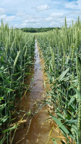 suivi blé 2021 - Page 5 20210619