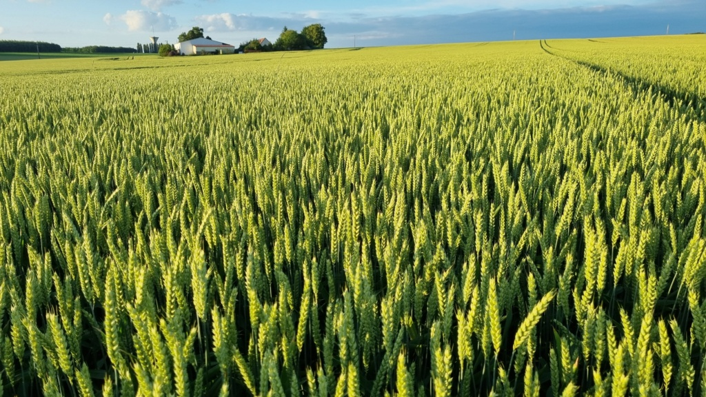 suivi blé 2021 - Page 5 20210621