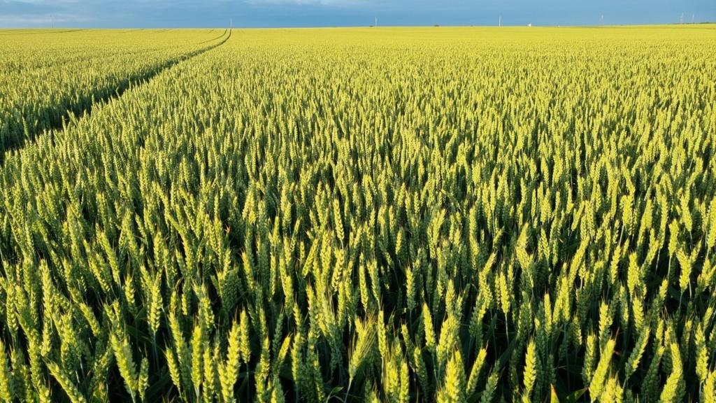 suivi blé 2021 - Page 5 20210622