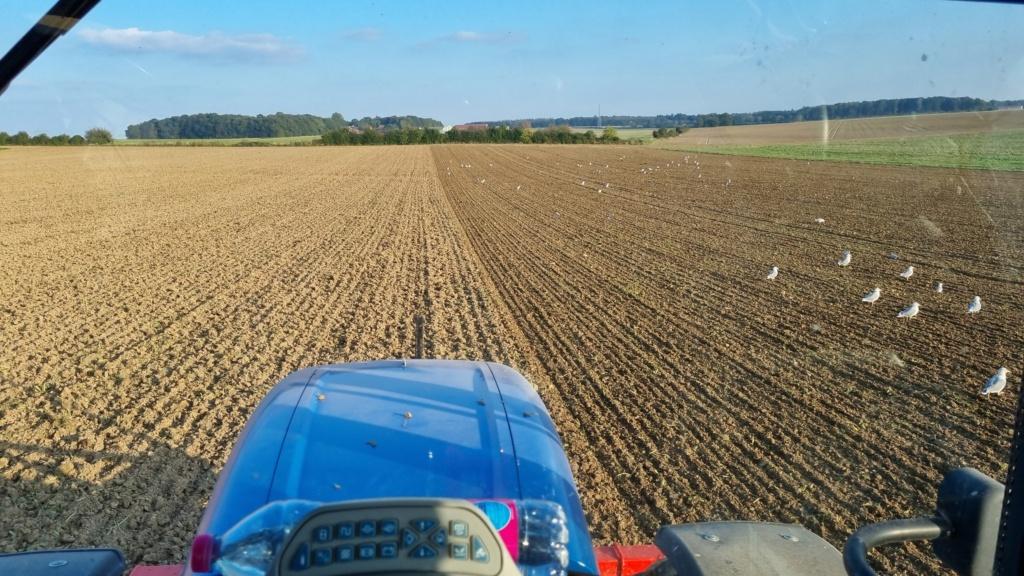 semis cereales automne 2021 - Page 2 20211013