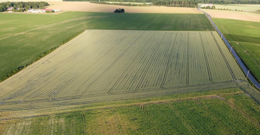 suivis blé 2020 - Page 5 Dji_0213