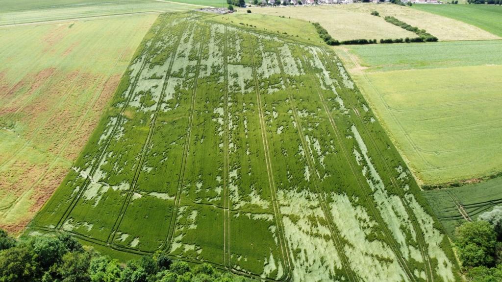 suivi blé 2021 - Page 5 Photo_18