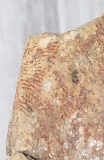 Señales de antigüedad en las lucernas Dactil10