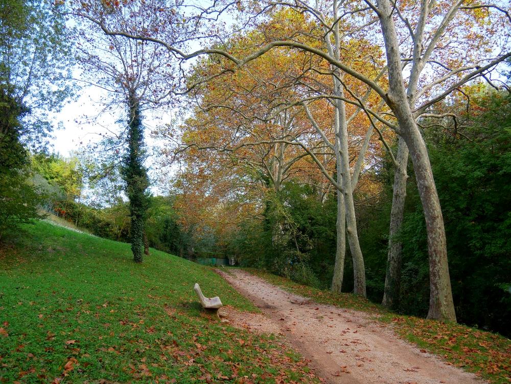 Dans la Forêt  cet Automne  10_bis10