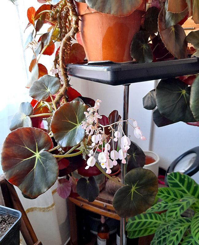Ma Salle de séjour transformée pour les plantes en Vérandas pff !!! - Page 2 128