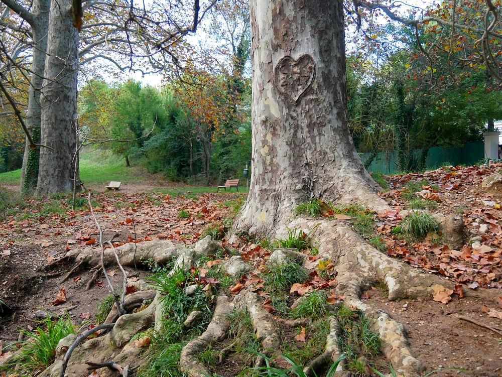 Dans la Forêt  cet Automne  12_bis10