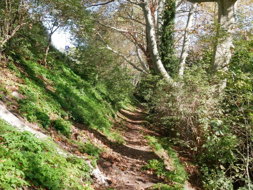 Dans la Forêt  cet Automne  14_bis10