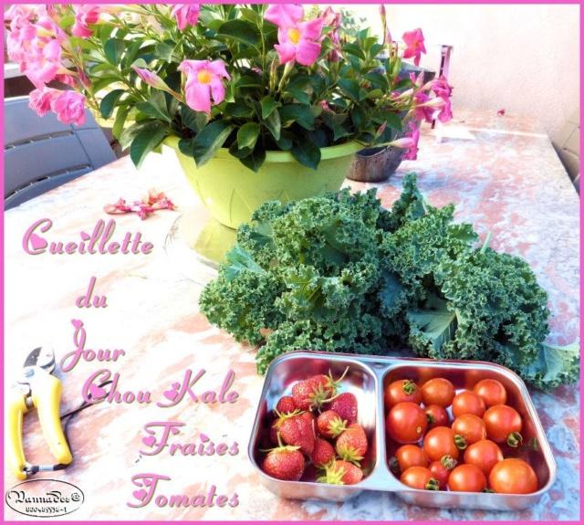 Fruits et Légumes de mon Jardin  19366410
