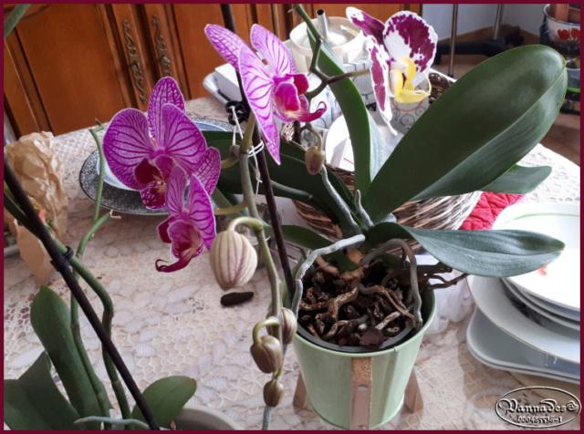 Orchidées mes Amours ♥♥♥ 20190120