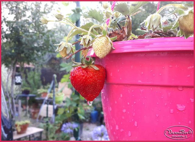 Fruits et Légumes de mon Jardin  20190127