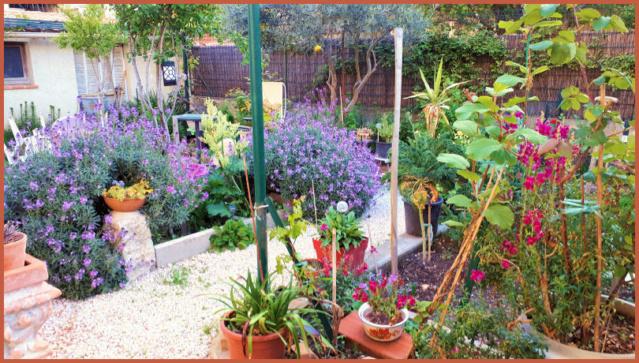 Mes fleurs de mon petit Jardin  20190416