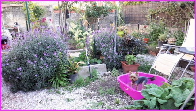 Mes fleurs de mon petit Jardin  20190418