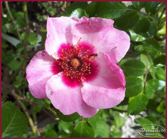 Mes fleurs de mon petit Jardin  20190518