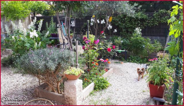 Mes fleurs de mon petit Jardin  - Page 6 20190653