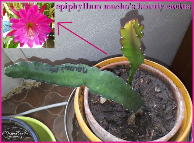 Epiphyllum !!! - Page 2 20190662