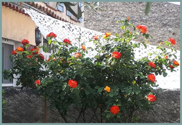 Mes fleurs de mon petit Jardin  - Page 6 20190668
