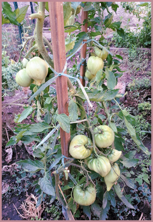 Fruits et Légumes de mon Jardin  20190714