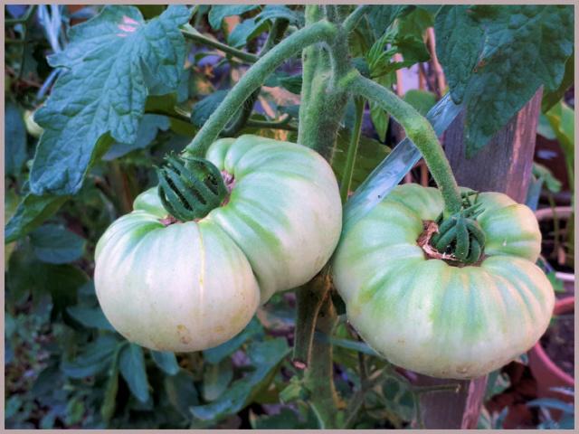 Fruits et Légumes de mon Jardin  20190715