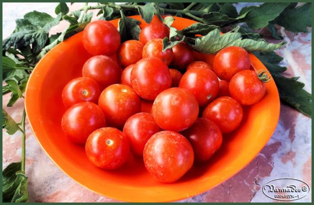 Fruits et Légumes de mon Jardin  20190716