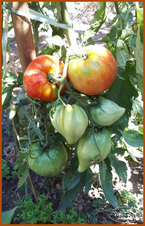 Fruits et Légumes de mon Jardin  20190724