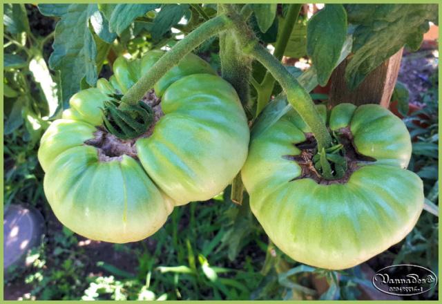 Fruits et Légumes de mon Jardin  20190726