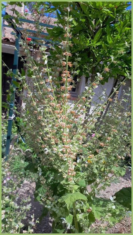 Mes fleurs de mon petit Jardin  - Page 10 20190739