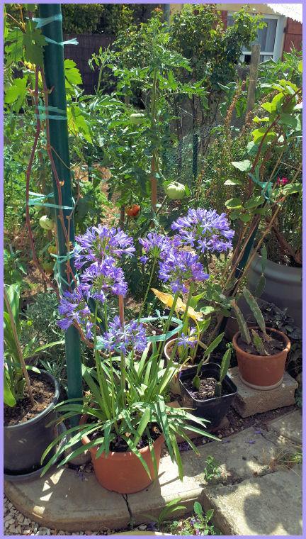 Mes fleurs de mon petit Jardin  - Page 10 20190740