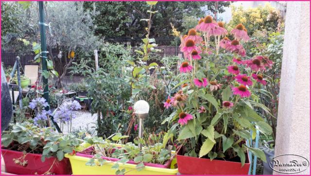 Mes fleurs de mon petit Jardin  - Page 10 20190744