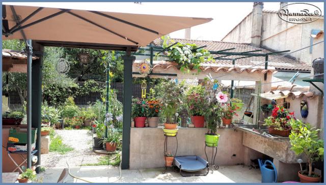 Hibiscus des Marais ou Moscheutos *** - Page 2 20190755