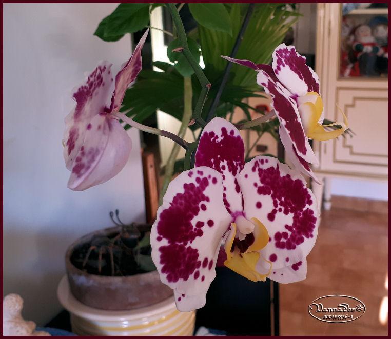 Mes Orchidées 20190761