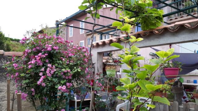 Fleurs du jardin Mai 2020  20200521