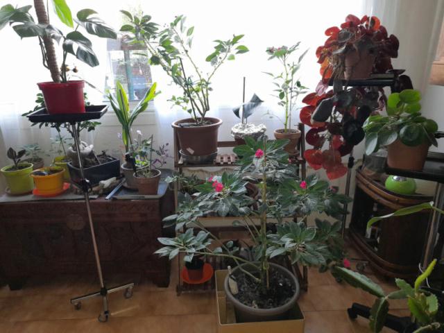 Ma Salle de séjour transformée pour les plantes en Vérandas pff !!! 20201114