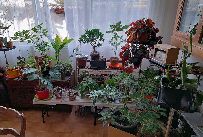 Ma Salle de séjour transformée pour les plantes en Vérandas pff !!! - Page 2 20201210