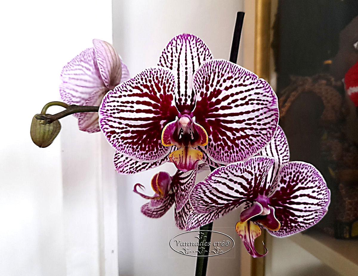 Mon Orchidée  20210215