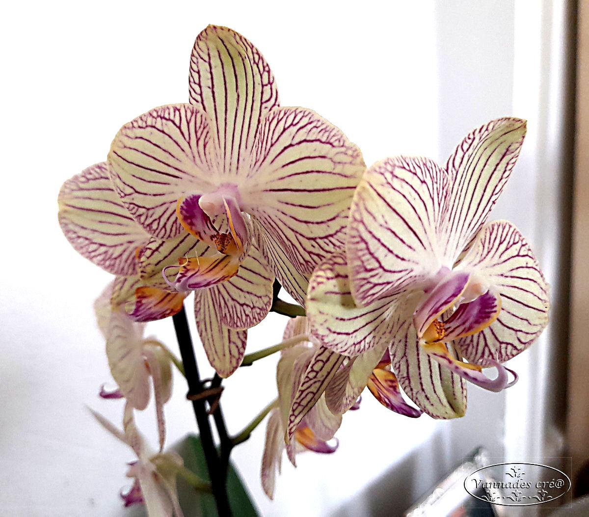 Mon Orchidée  20210216