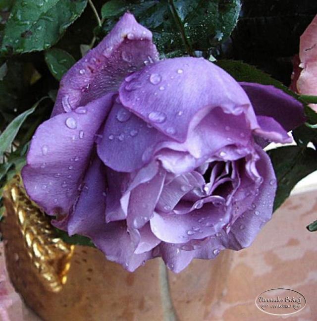 Mes fleurs de mon petit Jardin  29570910