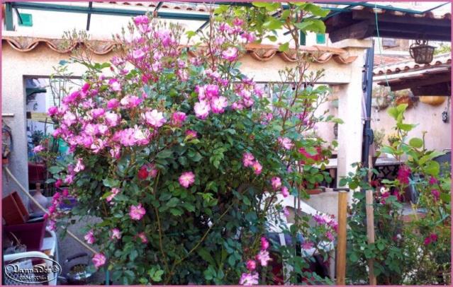 Mes fleurs de mon petit Jardin  60780910