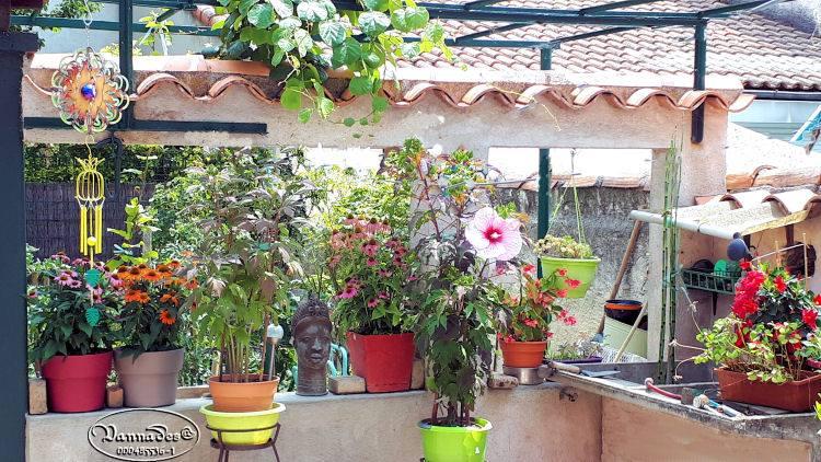 Hibiscus des Marais ou Moscheutos *** - Page 4 67368710