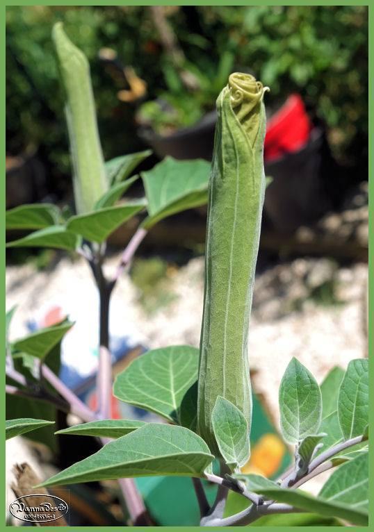 Que pensez-vous de cette plante 67646710