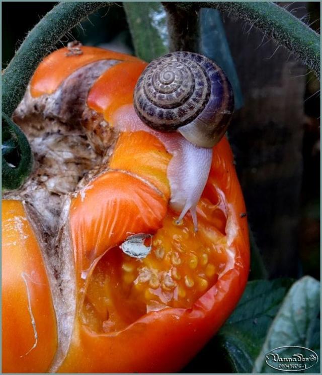 Légumes et fruits  du Jardin 67806710
