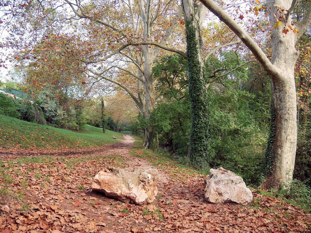 Dans la Forêt  cet Automne  9_bis_10